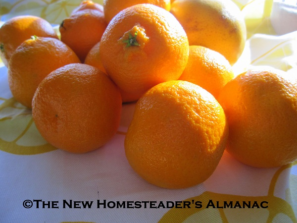 Top 30 Tips for Growing & Using Citrus Fruits - The New Homesteader's Almanac