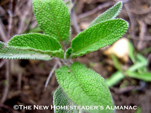 March Hometeading Chores - The New Homesteader's Almanac