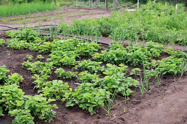 Veggie garden - The New Homesteader's Almanac