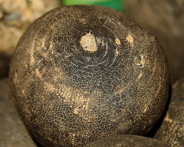 black winter radish