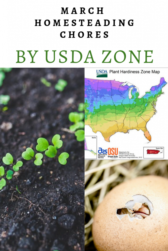 March Homesteading Chores by USDA zone - your list of chores to complete on your homestead during the month of March.