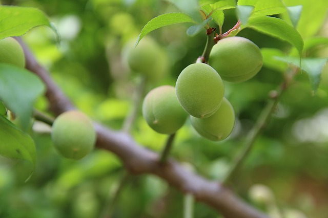 fruit trees provide shade and food...more for your money