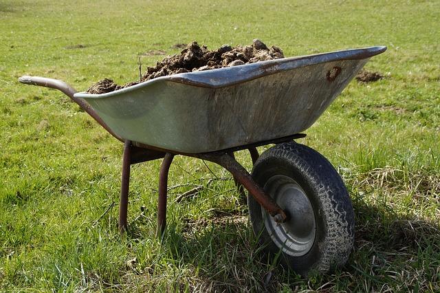 wheelbarrow of manure...save money on fertilizer!