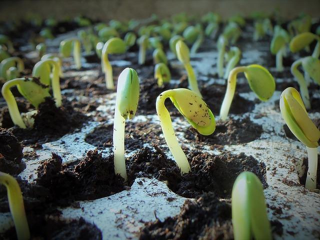 starting seedlings to save money