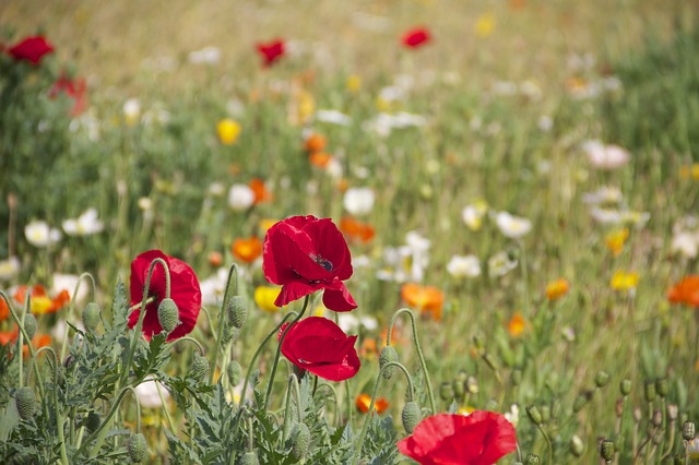 Wildflowers provide habitat for beneficial insects.