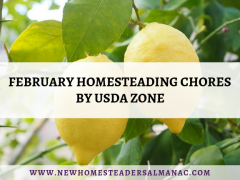 February Homesteading Chores by USDA Zone