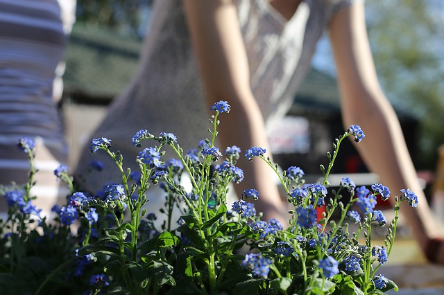 Connect with others who want to start a community garden