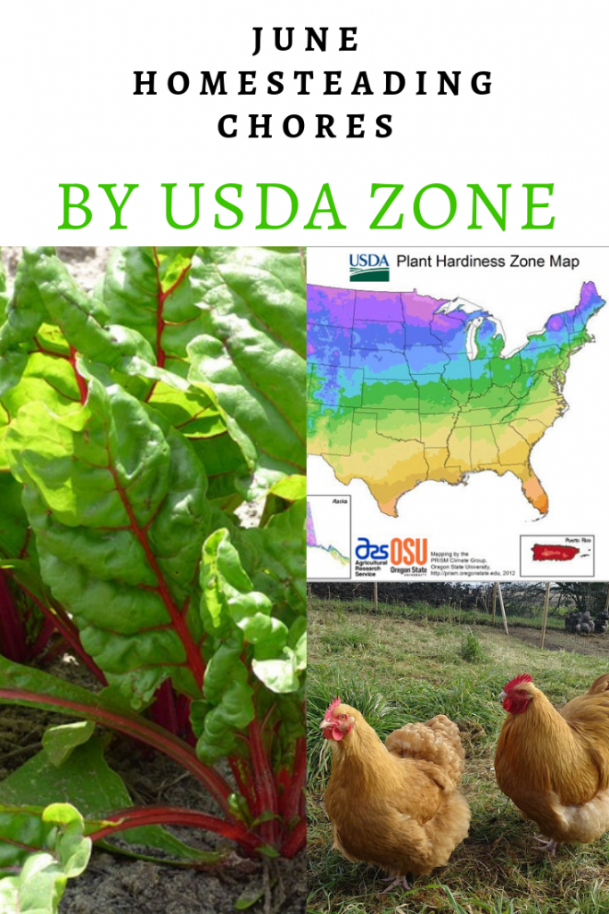 June Homesteading Chores by USDA Zone - The New Homesteader's Almanac