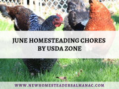 June Homesteading Chores by USDA Zone