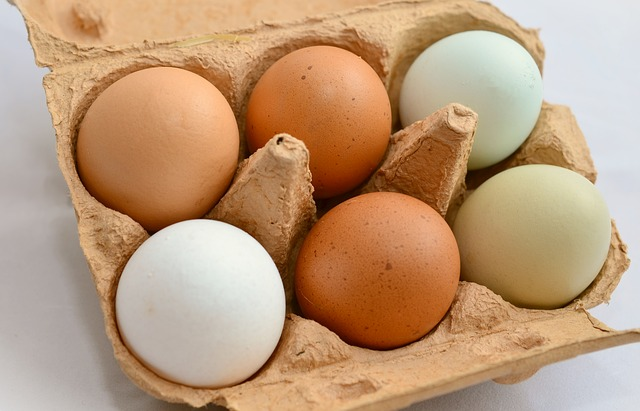 raising eco-friendly chickens produces eggs and meat for your table