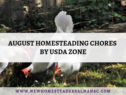 August Homesteading Chores