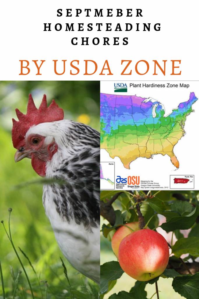 September Homesteading Chores by USDA Zone - Here are the chores for your homestead in the month of September