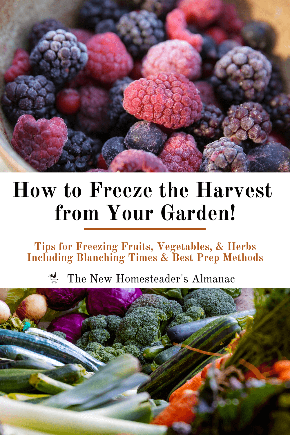 How to Freeze the Harvest from Your Garden